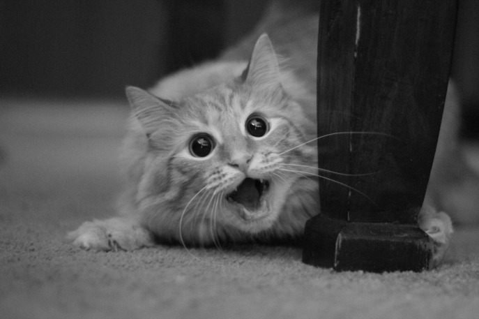 funny-cat-pictures-007-039